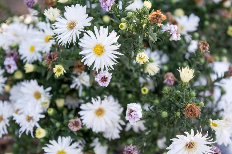 Flower Days Toledo