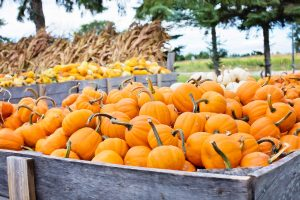 agriculture-autumn-cropland-265315