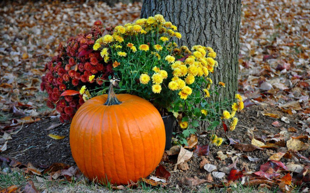 autumn-autumn-colours-autumn-leaves-749927