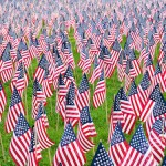 United States flags on display for Memorial Day