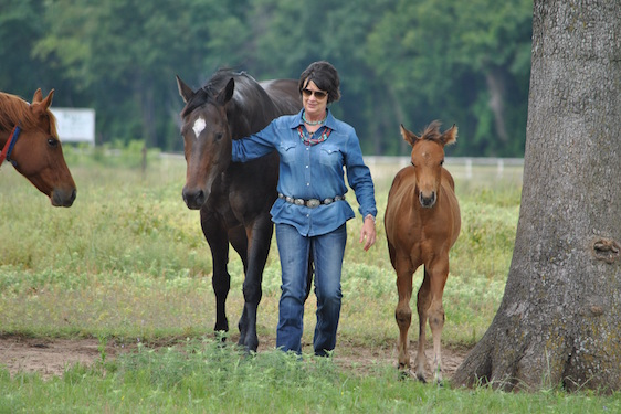 Lisa Modern Loves North Texas Horse Country