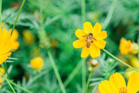 Bugs, Flowers and Bees