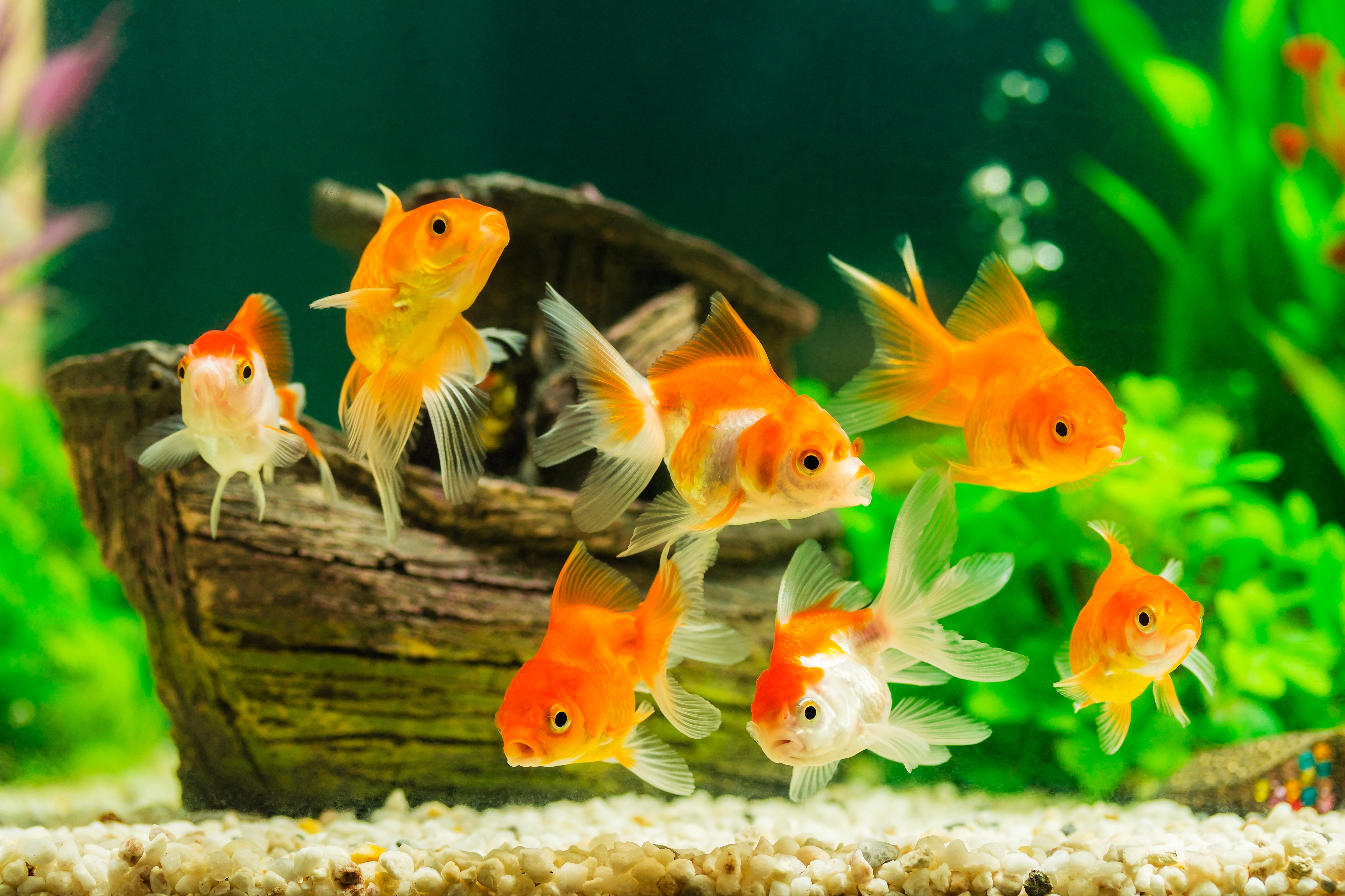 The Many Benefits of Home Aquariums