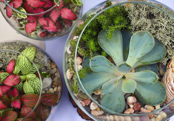 Decorative glass vases with succulent and cactus plants.Glass interior terrarium with succulents and cactuses.Miniature garden in glass with cactuses and succulents.Top view.