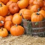 Overflow of pumpkins for Halloween