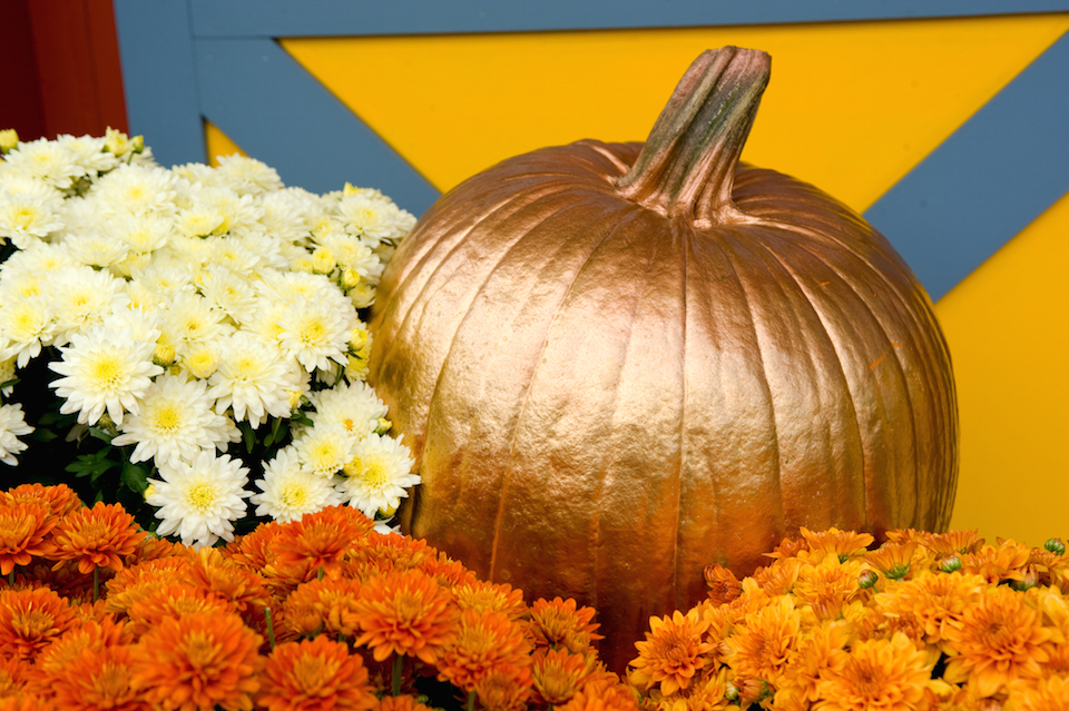 Halloween autumn display