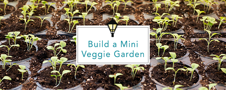 mini-vegetable-garden