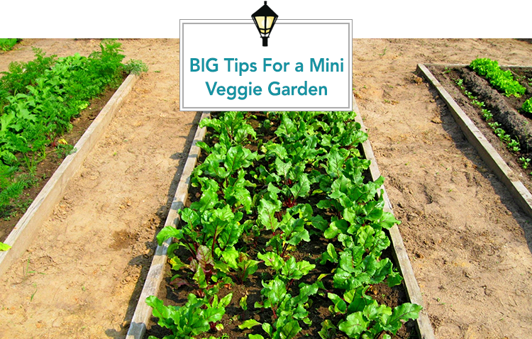 Tips And Tricks For Your Mini Vegetable Garden
