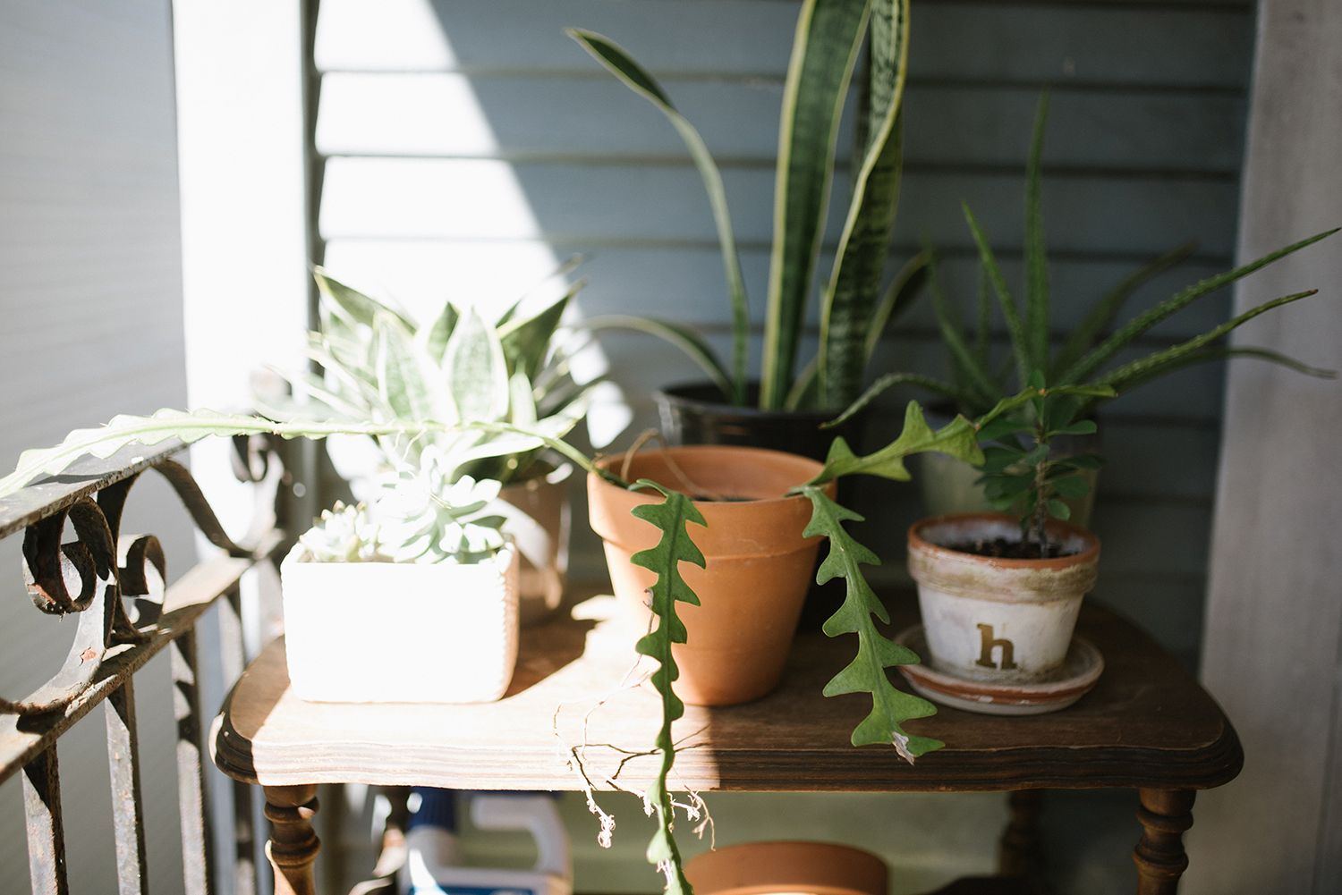 spruce up your home with low maintenance plants