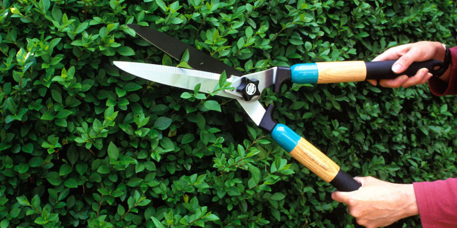 Spring Gardening Tips: Pruning and Trimming