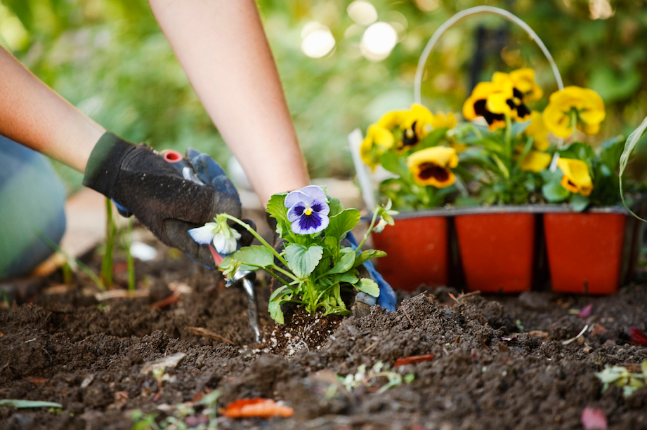 Spring gardening tips inspiration for Planting a garden