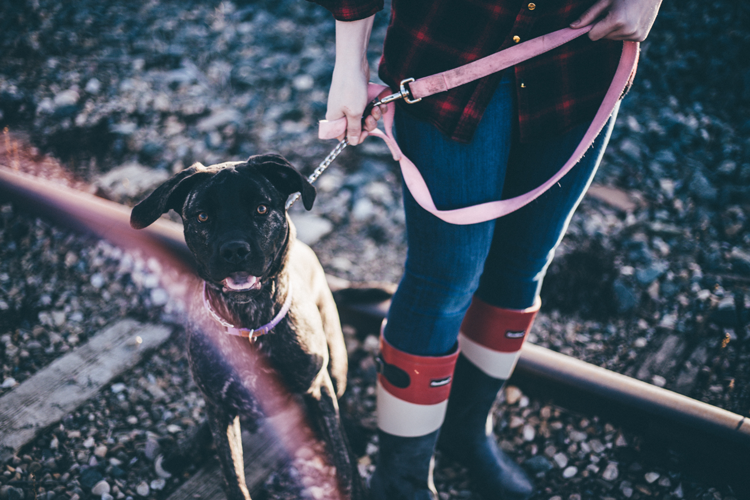 Where to adopt a dog in Fort Collins Loveland Colorado