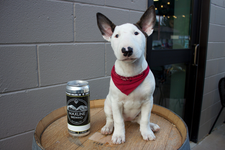 Maxline Brewing Dog-Friendly