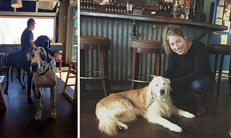 Zwei Brewing Dog-Friendly