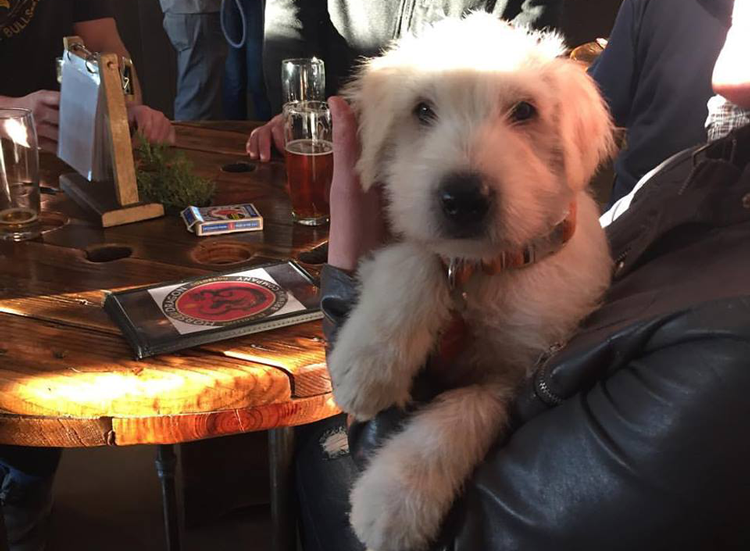 Horse and Dragon Brewing Fort Collins Dog-Friendly