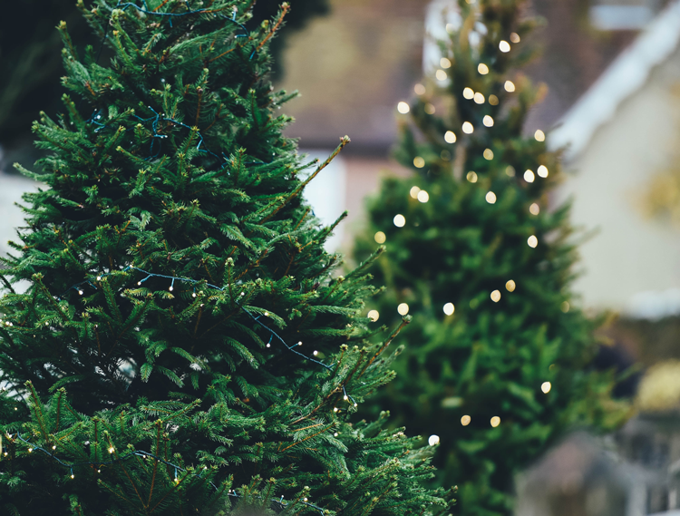 where to get a Christmas tree in Fort Collins Colorado
