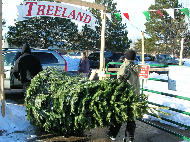 Treeland where to get a Christmas tree in Fort Collins Coloradowhere to get a Christmas tree in Fort Collins Colorado