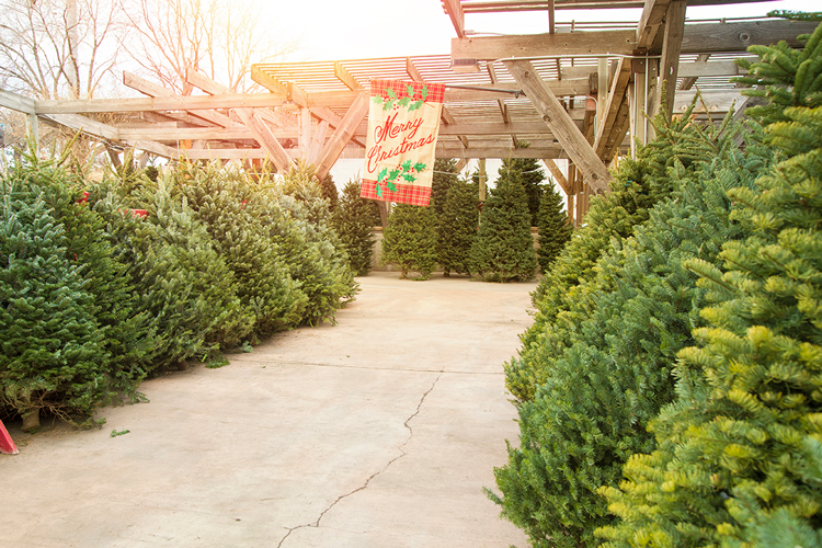 Bath Garden Center where to get a Christmas tree in Fort Collins Colorado