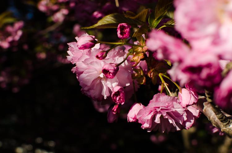 Gardens on Spring Creek Fort Collins, CO