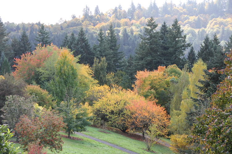 Hoyt Arboretum Portland, OR