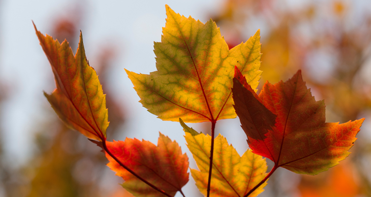 9 of the Best Hikes to See Fall Foliage in Oregon + Southwest Washington