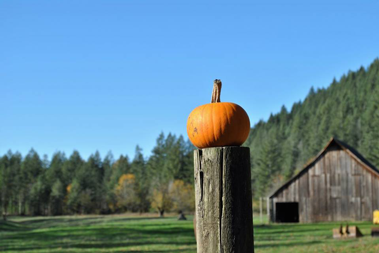 Pumpkin Lane at Pomeroy Farm