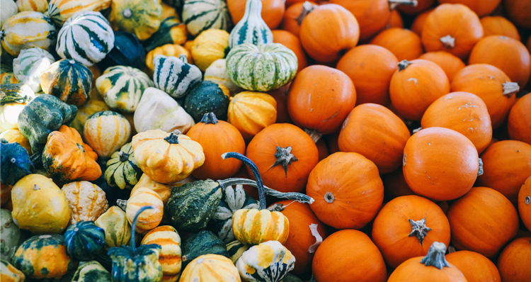 The 19 Best Pumpkin Patches Near Portland, Mapped