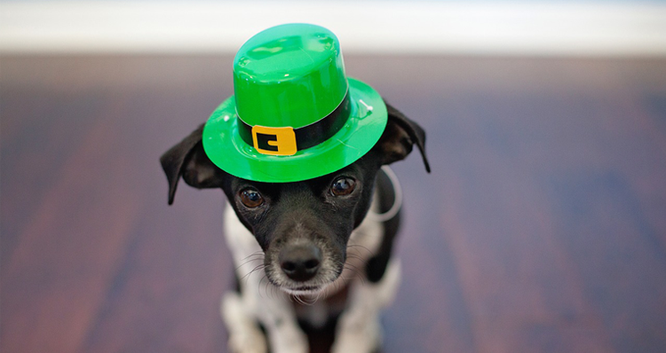11 Essential St. Patrick's Day Events in Portland, Oregon