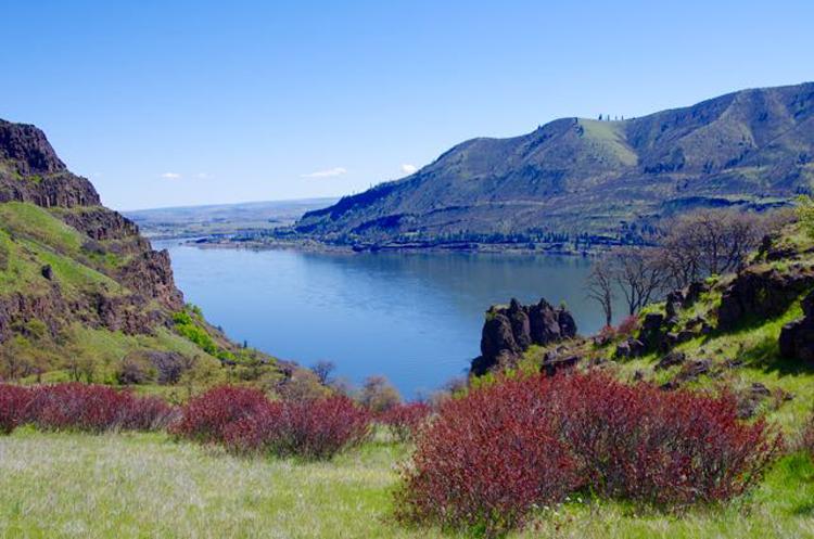 Lyle Cherry Orchard | Lyle, Oregon