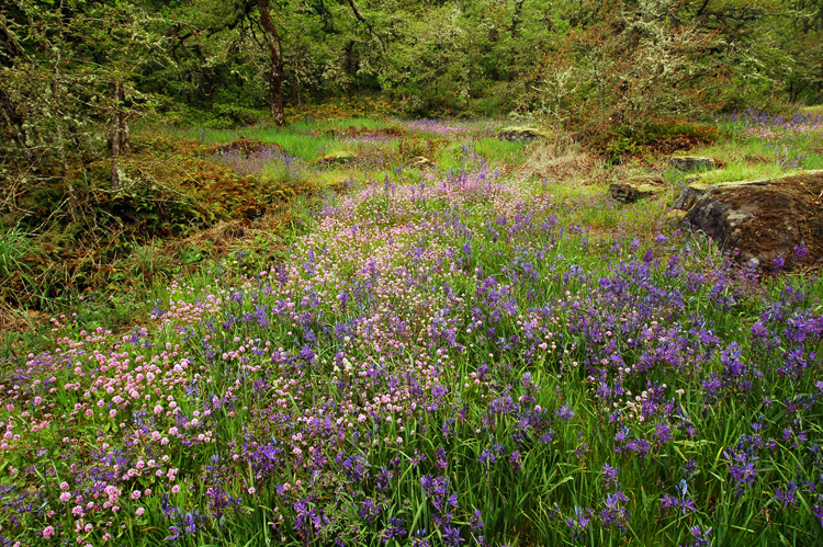 Camassia Natural Area West Linn, OR