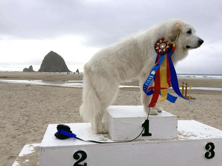 Dog Show on the Beach Cannon Beach, OR