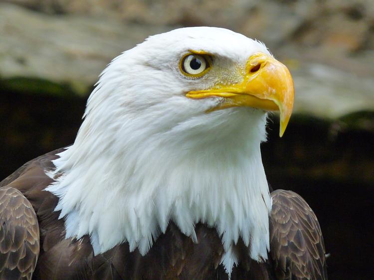 Memorial Day Oregon Zoo