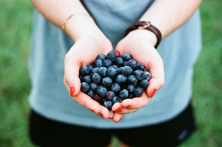 Berry Picking in the Pacific Northwest