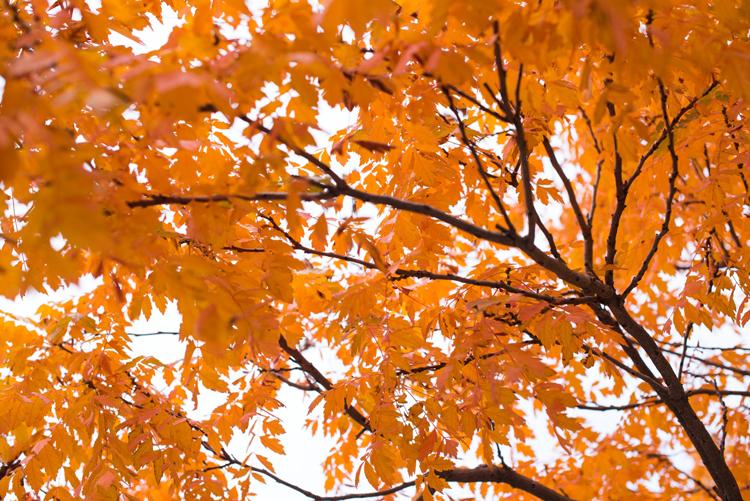 Fall Foliage Near Hood River, OR