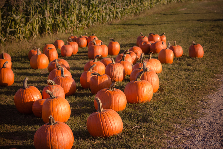 Pumpkin Patches in Pacific Northwest