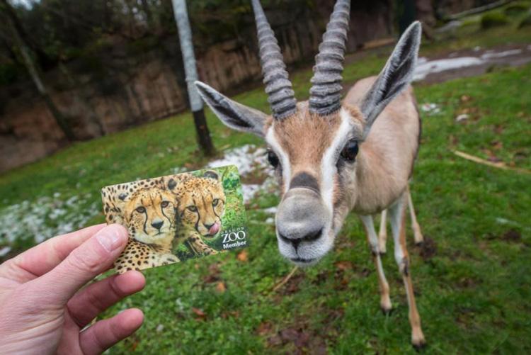 Oregon Zoo Membership
