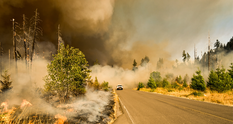 Ways to Help With the Oregon Fires | Donations, Volunteer Opportunities, Etc.