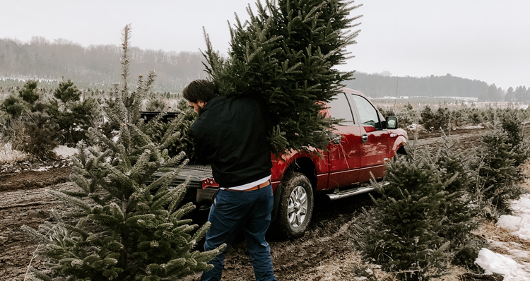Where to Get a Christmas Tree in the Portland Area