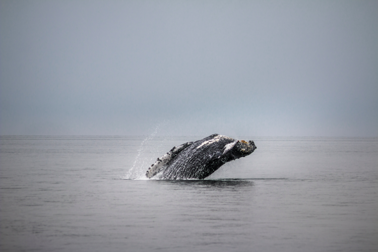 Whale Watching in Cannon Beach, OR