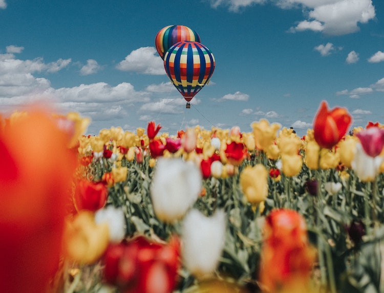 Wooden Shoe Tulip Festival Woodburn, Oregon