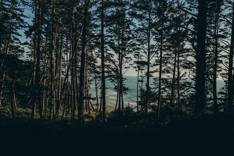 Reasons to Buy a Home Along the Oregon Coast