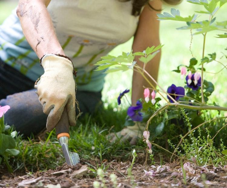 Community Gardens in Portland, OR
