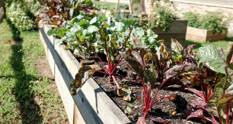 Your Guide to Community Gardens in Portland, Oregon