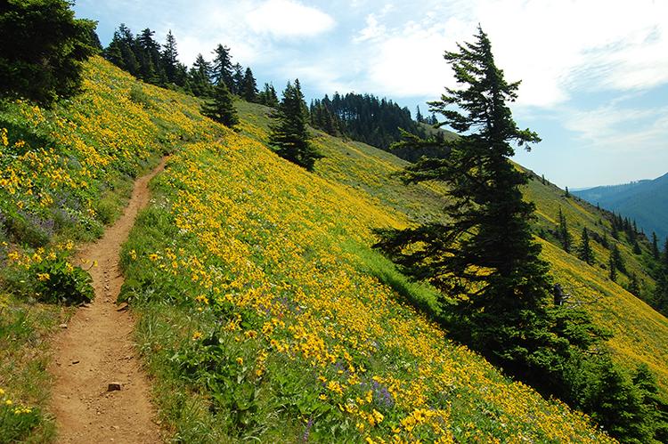 Dog Mountain Trail Oregon