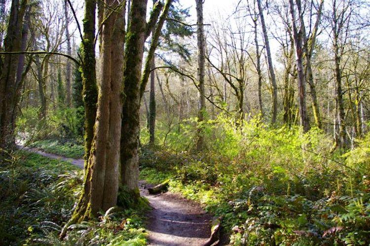 Dogwood-Wild Cherry Loop Hike Oregon