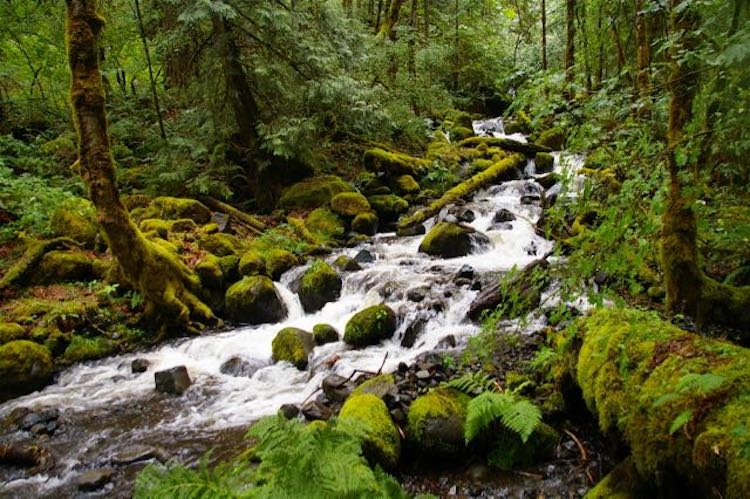 Dry Creek Falls Oregon