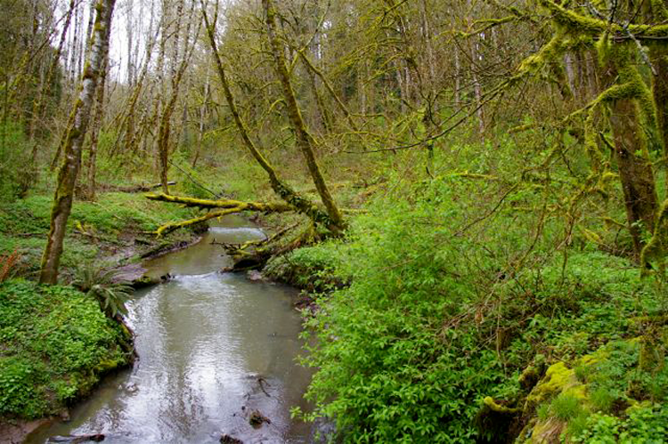 Outer Loop at Tryon Creek State Park Oregon