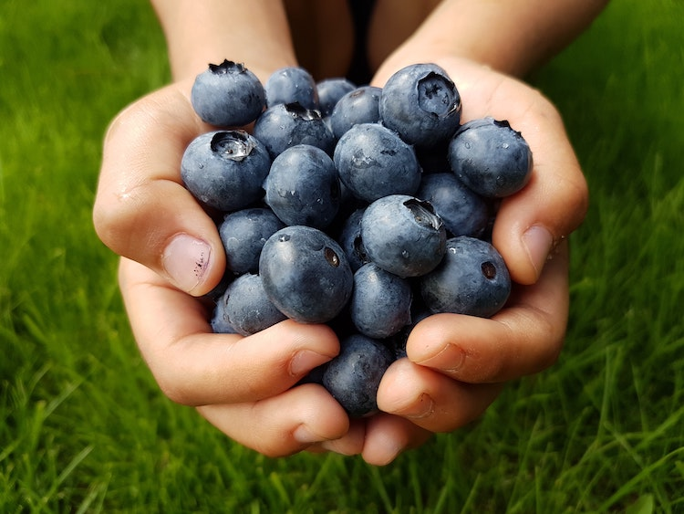 James Organic Blueberries in Hood River, OR