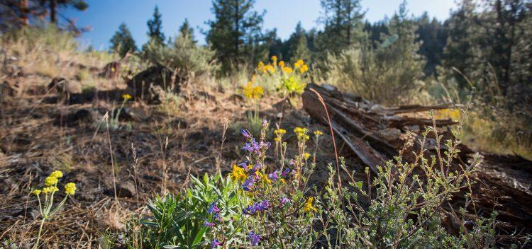 Fall Hikes Near Bend, Oregon