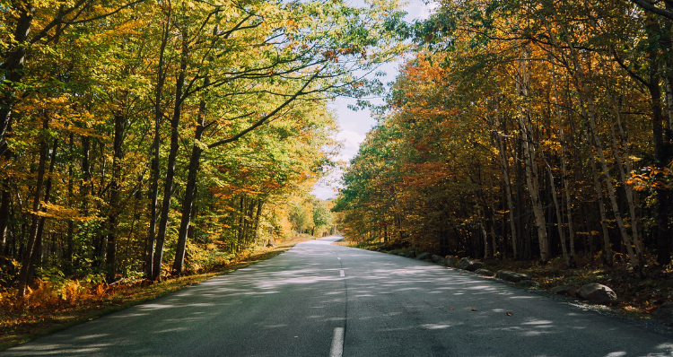 8 Places to See Fall Foliage Around Lake Oswego